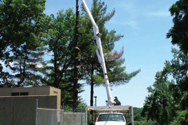 commercial-tree-trimming-lift